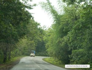 Drive through western ghats - Greenery all around