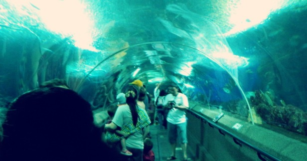 Singapore Underwater World