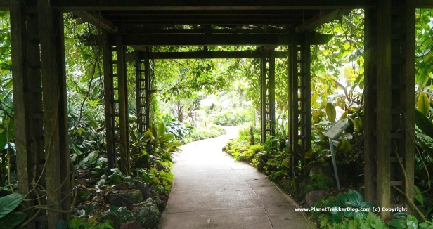 National Orchid Garden - 1