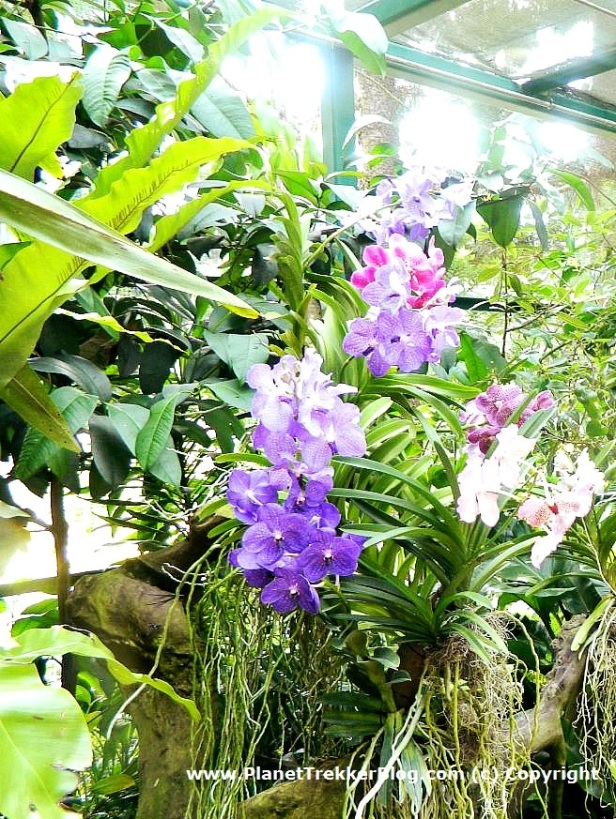 National Orchid Garden - 11