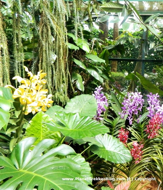 National Orchid Garden - 12