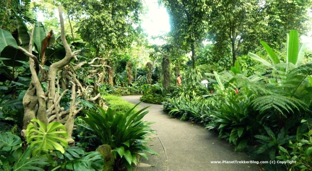National Orchid Garden - 2