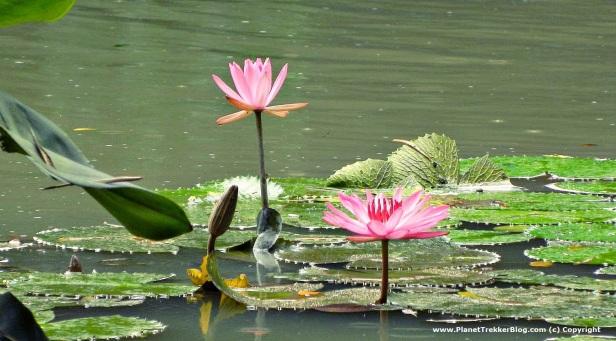 Jurong Bird Park 13