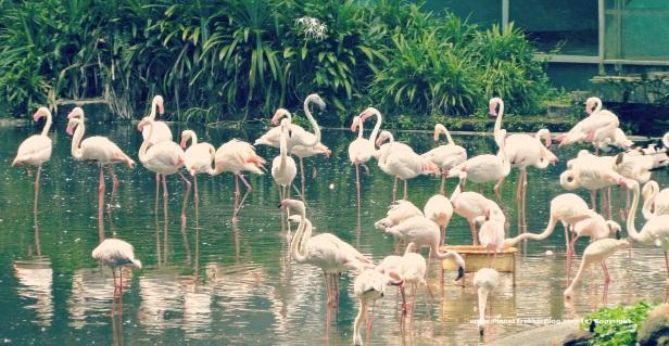 Jurong Bird Park 15