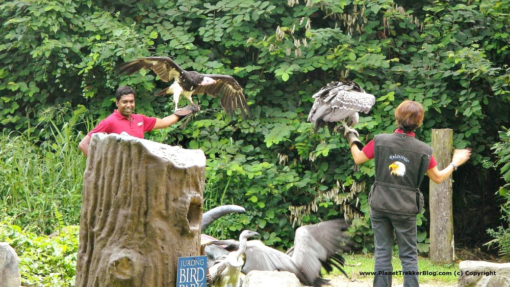 Places to Visit in Singapore – Jurong Bird Park – Planet ...