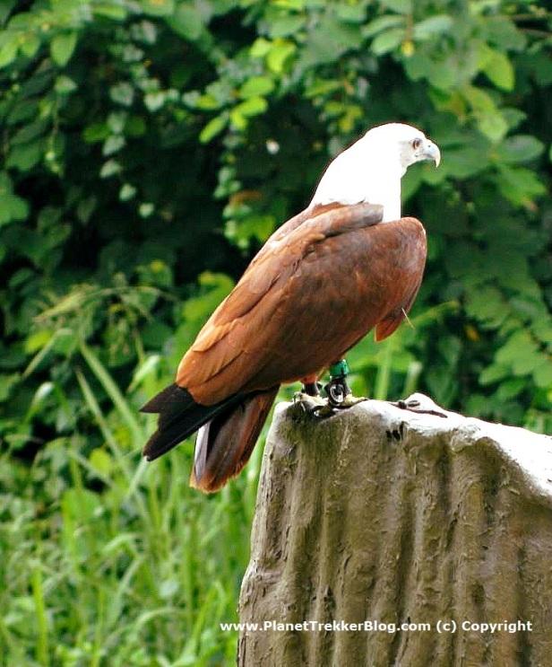 Jurong Bird Park 17