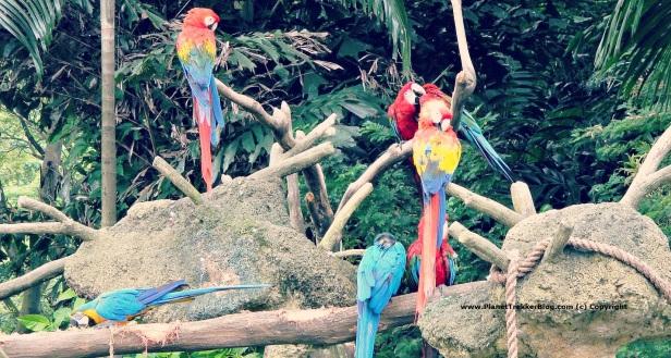 Jurong Bird Park 19