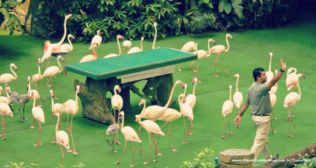 Jurong Bird Park 22