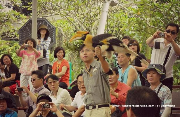 Jurong Bird Park 23