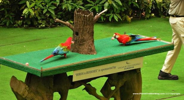 Jurong Bird Park 24