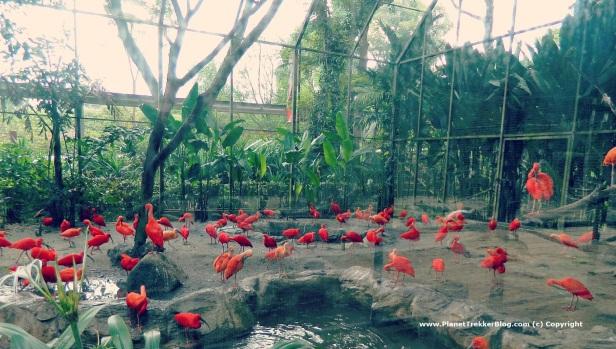 Jurong Bird Park 3