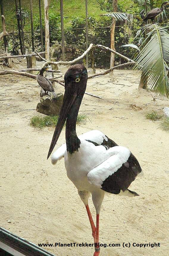 Jurong Bird Park 4