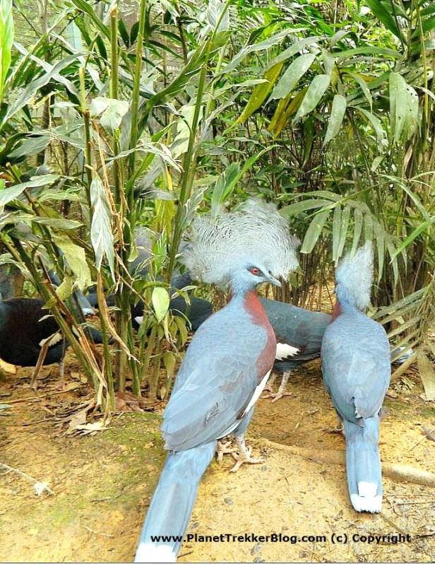 Jurong Bird Park 6