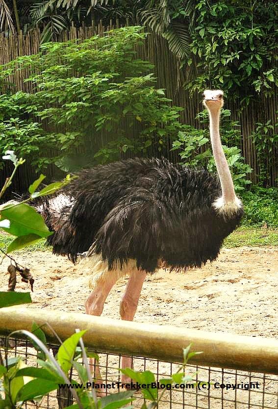 Jurong Bird Park 9